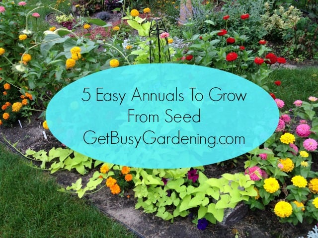 5 Easy Annuals To Grow From Seed