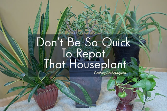 Dont Be So Quick To Repot That Houseplant
