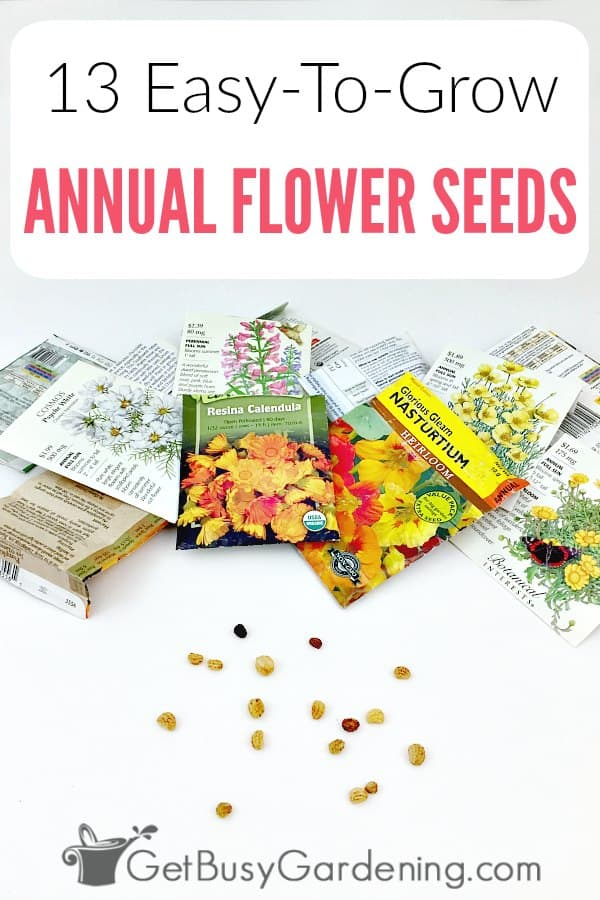Growing summer annuals from seeds is fun, and a great way to save money. Some of the most popular garden flowers can be started from seeds. If you want to grow your own flowers, get started with this list of easy annuals to grow from seed. Whether you plan on starting seeds indoors or planting them directly in your garden, you'll find ideas on this list. From marigolds to coleus, snapdragon, sunflowers or zinnia, petunia and more!
