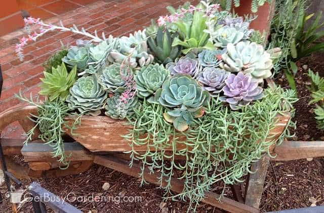 Gorgeous Succulent Garden Growing Indoors