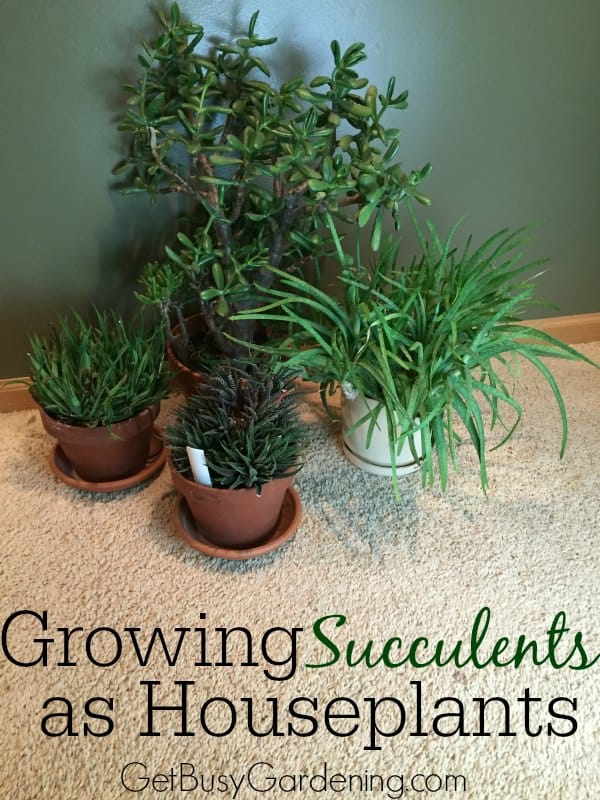 Succulents make wonderful, easy to care for, low maintenance houseplants. Here you will find tons of tips for growing succulents indoors as houseplants.