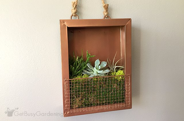 Overwintering vertical succulent garden indoors