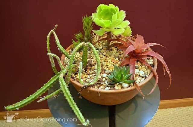Small indoor succulent garden