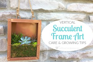 Succulent Frame Art Care And Growing Tips