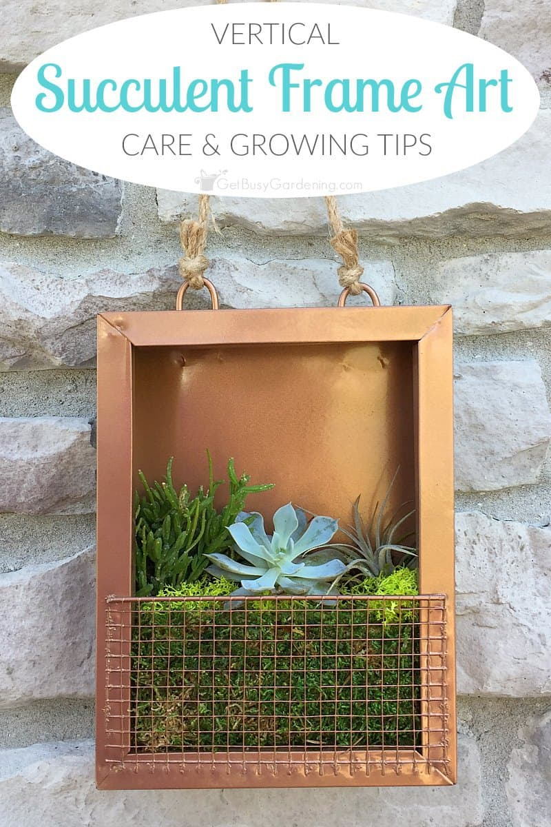 Succulent frame care and tips for growing succulent art a living succulent portrait adds life to dull spaces find the perfect spot to hang jeuxipadfo Image collections