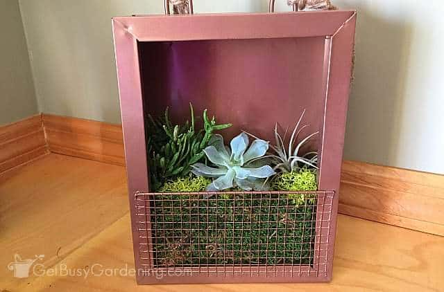 Succulent frame sitting on window ledge