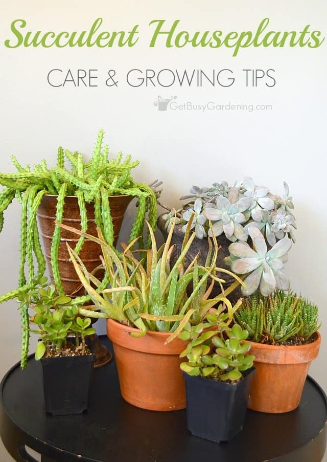 Succulent plant care how to take care of succulents as for Maintenance of indoor plants