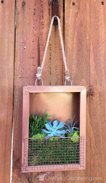 Succulent wall art hanging on my fence