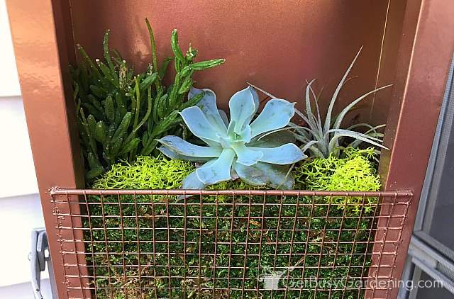 Types of succulents in the frame