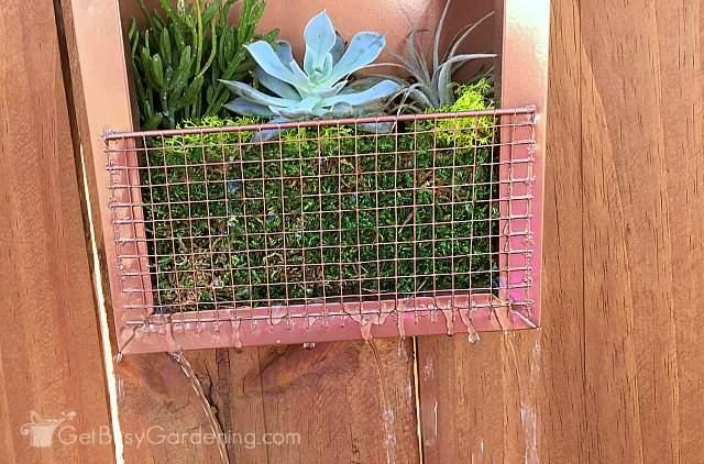 Watering my vertical succulent garden