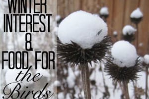 Winter Interest & Food For The Birds