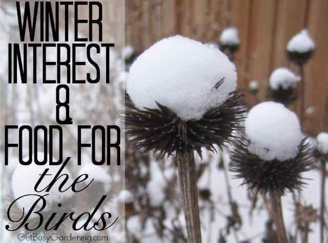 Garden Plants For Feeding Birds In Winter