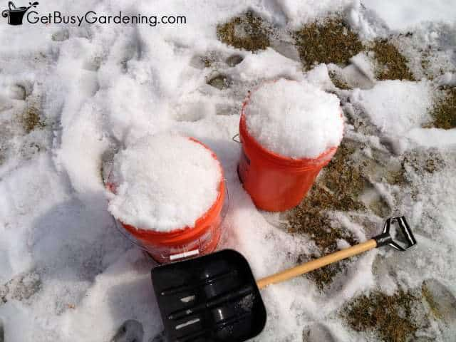 Filling my buckets with snow for melting