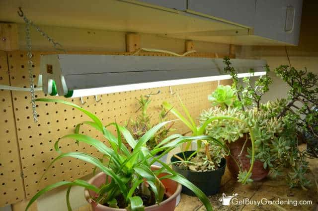 Fluorescent Lights For Indoor Gardening