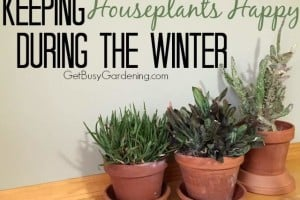 Keeping Houseplants Happy During The Winter