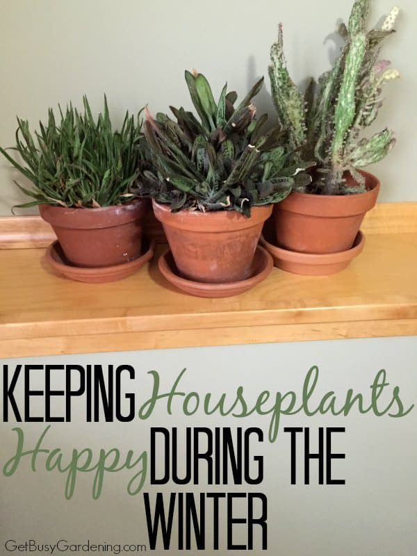 Keeping houseplants alive and happy during the winter can be hard. Ease the stress by learning the basics of how to care for a houseplant during winter.