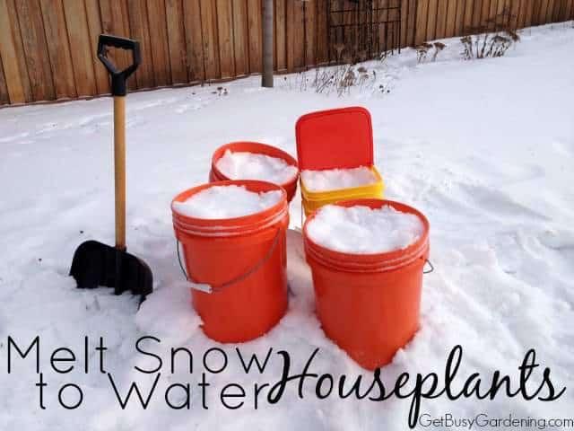 Melt Snow To Water Houseplants
