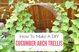 How To Make A Simple Cucumber Arch Trellis