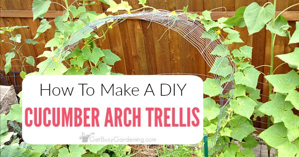 Cucumber Trellis Diy How To Make A Simple Cucumber Arch