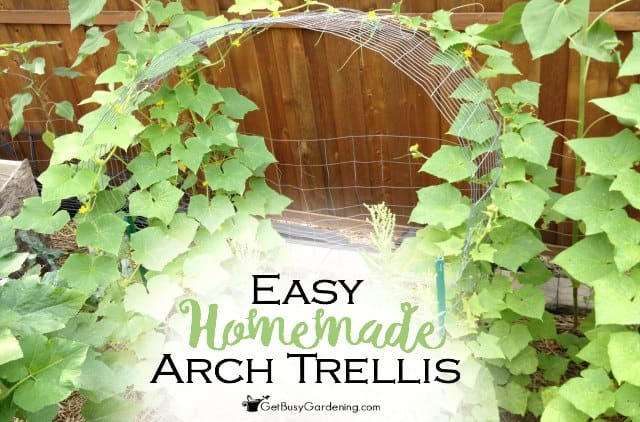 Easy Homemade Arch Trellis