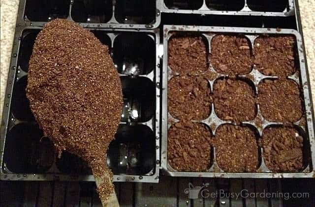 Filling seed trays with seed starting mix
