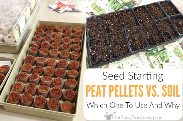 Seed Starting Peat Pellets Vs. Soil Which Should You Use And Why?