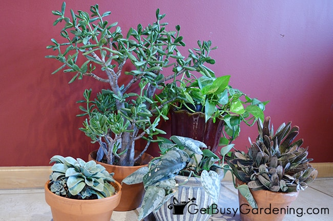 Houseplants Need Extra TLC In Spring