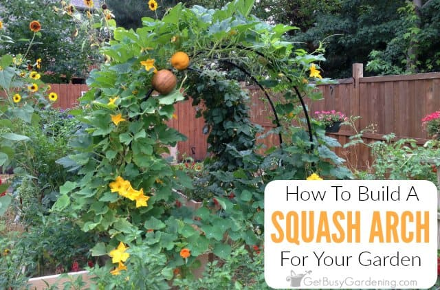 How To Build A Squash Arch For Your Garden - Get Busy Gardening Raised Beds Garden Arbor Designs on raised garden bed cold frame, raised garden bed tree, raised garden bed garden, raised garden bed bench, raised garden bed table,