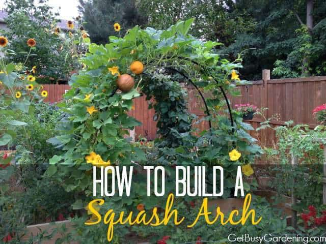 How To Build A Squash Arch | GetBusyGardening.com