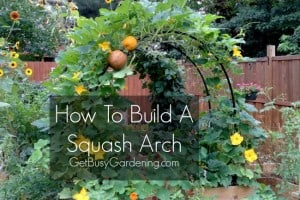 How To Build Squash Arch