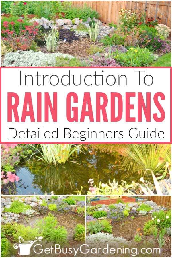 Introduction To Rain Gardens: Detailed Beginners Guide