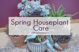 Spring Houseplant Care