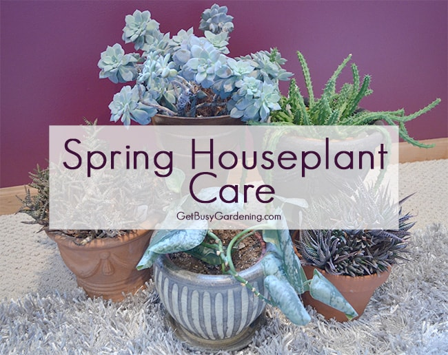 Spring Houseplant Care Checklist