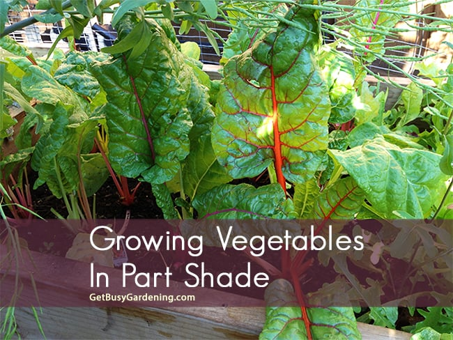 Growing vegetables in part shade for What vegetables to grow