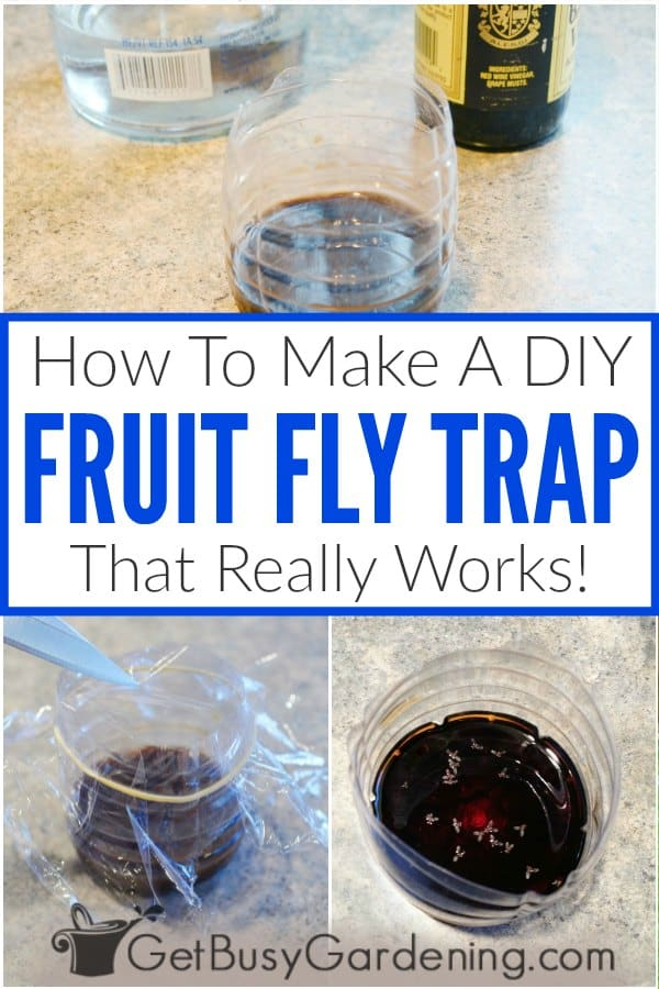 How To Make A DIY Fruit Fly Trap That Really Works!