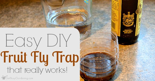 Super Easy DIY Fruit Fly Trap (that really works!) - Get