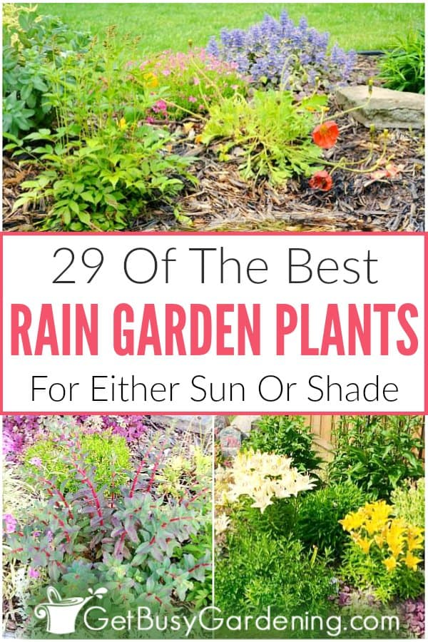 29 Of The Best Rain Garden Plants For Either Sun Or Shade