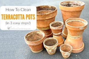 How To Clean Terracotta Pots (In 3 Easy Steps!)