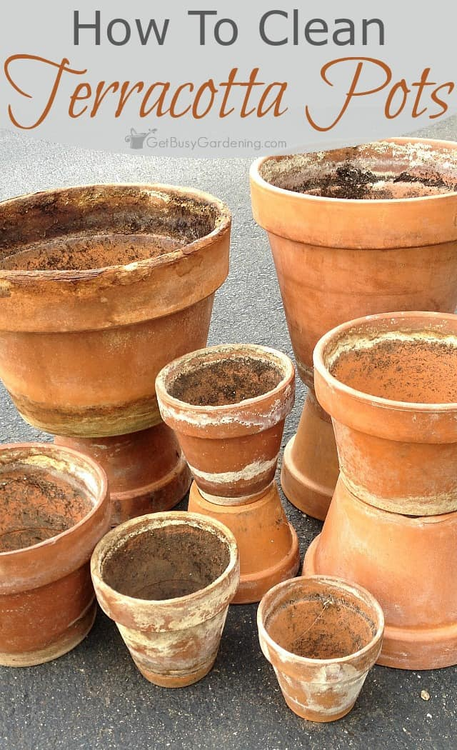 Why buy brand new clay pots when you can give your crusty old ones new life. Follow these simple step-by-step instructions to clean terracotta pots.