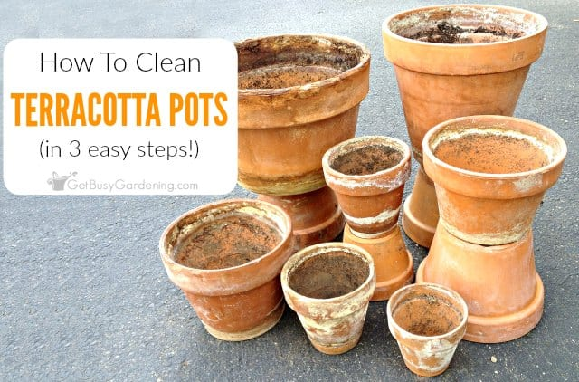 How to Clean Terracotta Pots (Clean Clay Pots In 3 Easy Steps!)
