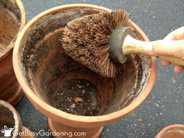 Remove Loose Dirt From Terracotta Pot