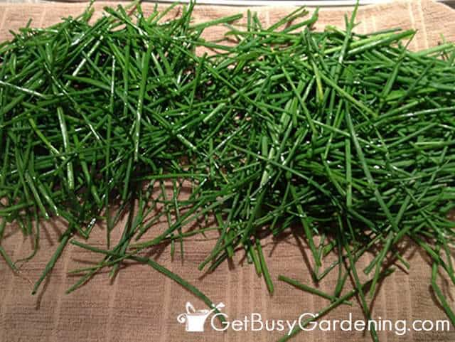 Drying Chives Before Freezing