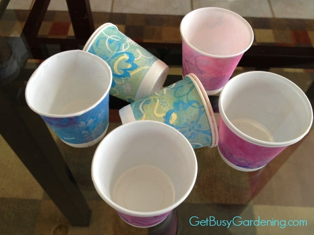 Dixie Cups Used In Winter Sowing Containers