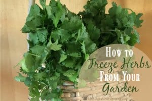 How To Freeze Herbs Fresh from Your Garden