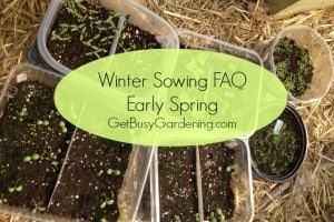Winter Sowing FAQs – Early Spring
