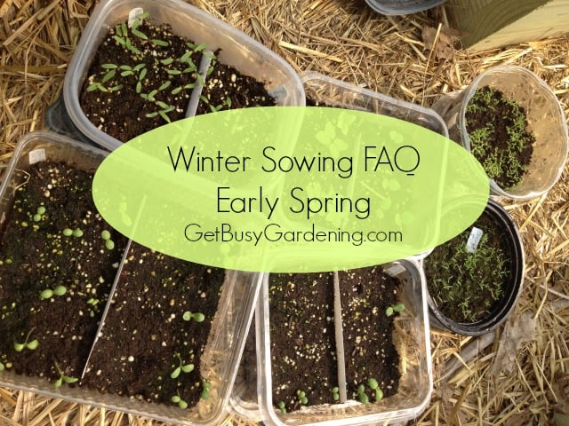 Winter Sowing FAQ Early Spring