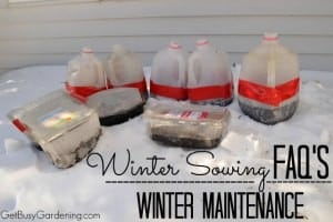 Winter Sowing FAQs – Winter Maintenance