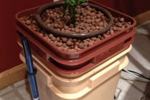 An Experiment in Hydroponics