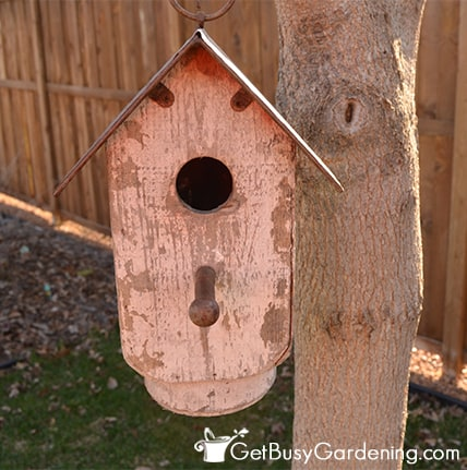 Clean Out The Bird Houses