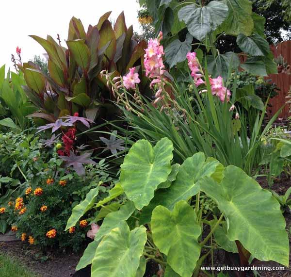 My dream garden for Dream plants for the natural garden
